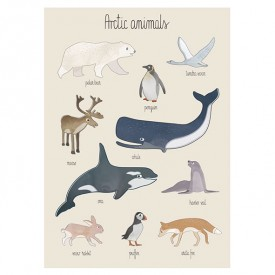Poster - Arctic Animals