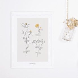 Framed Art Print Chamomile (30x40cm) Grey Lilipinso